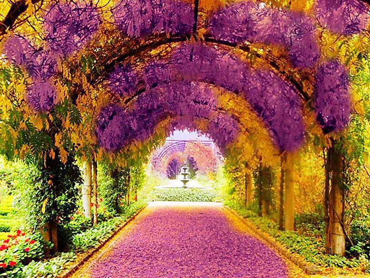 Photograph of a garden walkway draped in flowers