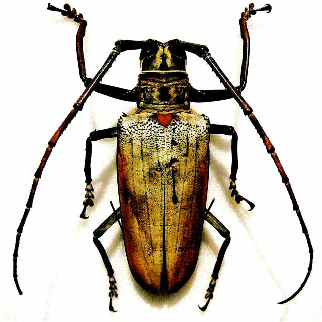 Photograph of a large bug