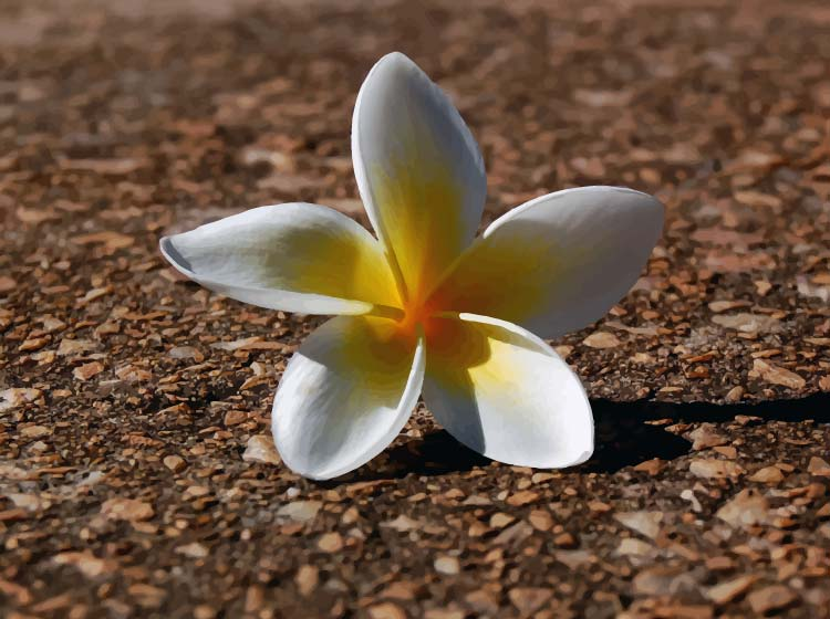 A white flower on a ground background